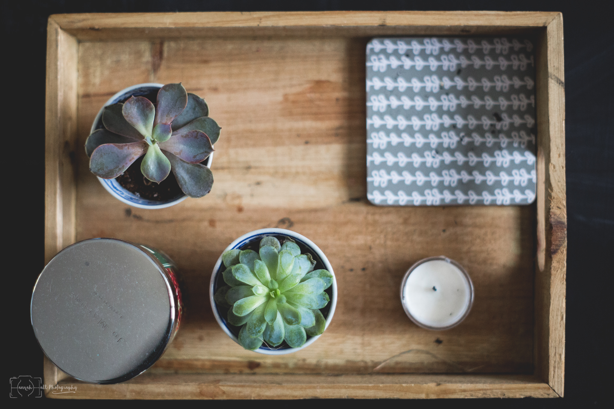 succulents-on-a-tray